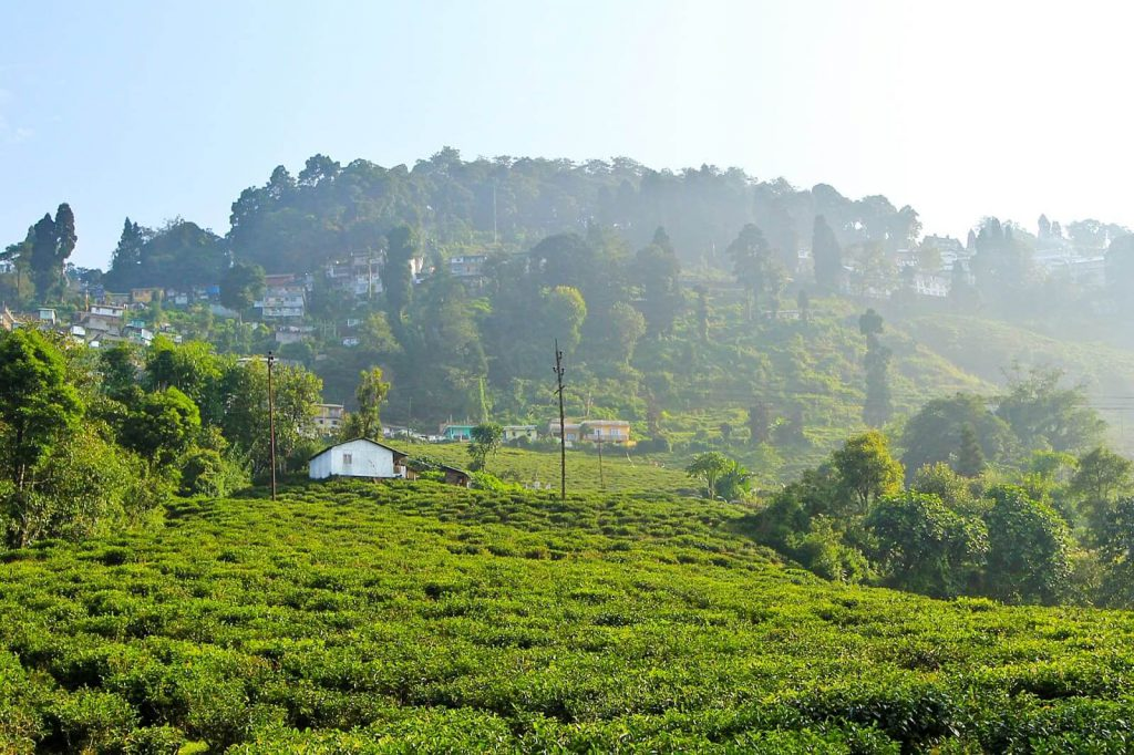 darjeeling-happy-valley